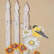 Goldfinch on Daisies